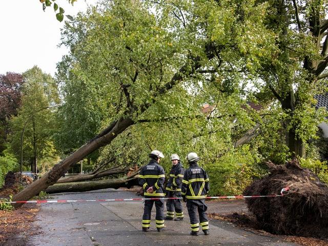Bäume auf Strassen und Rettungskräfte