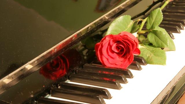 Rote Rose auf Klaviertasten
