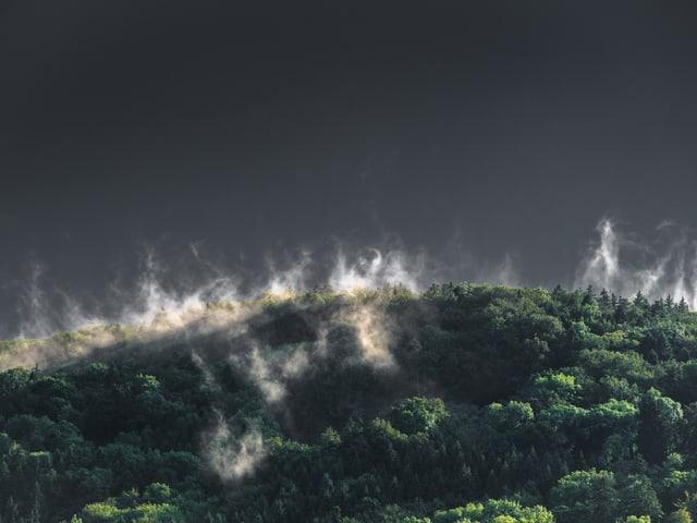 Dampf steigt aus dem Wald auf.
