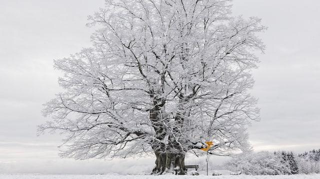 Auch der Februar war kühler als üblich mit Schnee in Linn.