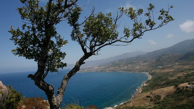 Der Blick auf die Küste bei Tizi Ouzou