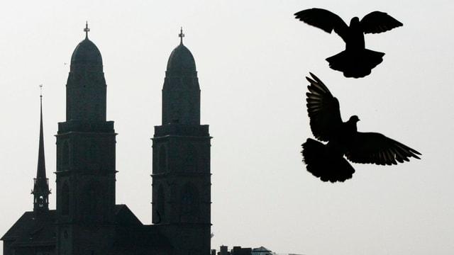 Die Türme des Zürcher Grossmünsters, davor zwei Tauben.