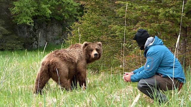 Video «Der Bärenmann – Reno Sommerhalders Leben unter Bären» abspielen