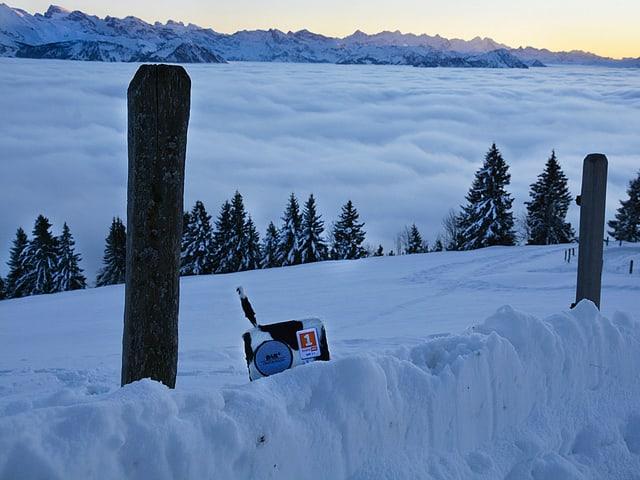 Ein Radio mit schwarz-weissem Fell steht im Schnee, im Hintergrund das Nebelmeer und Berge.