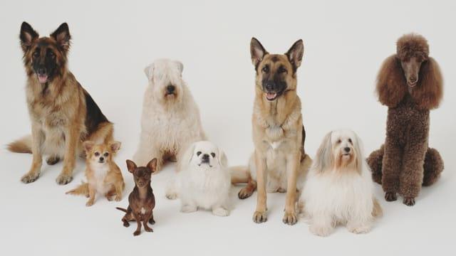 Verschiedene Hunderassen posieren auf einem Bild.