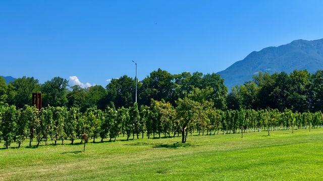 Blick über Obstplantagen im Maggiadelta.