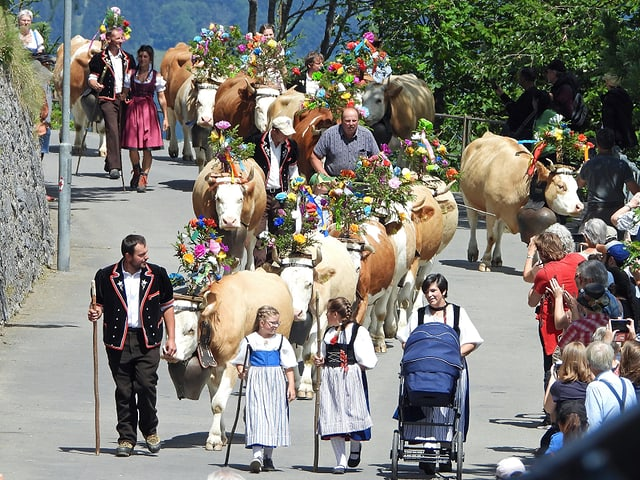 Beblumte Kühe und Frauen und Männern in Trachten ziehen eine kurvige Strasse entlang.