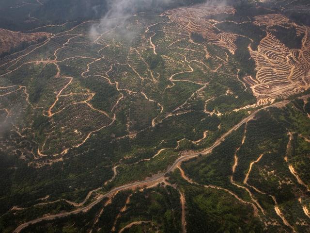 Luftweg von Miri nach Long Banga. Man sieht die Spuren der Abholzungen.