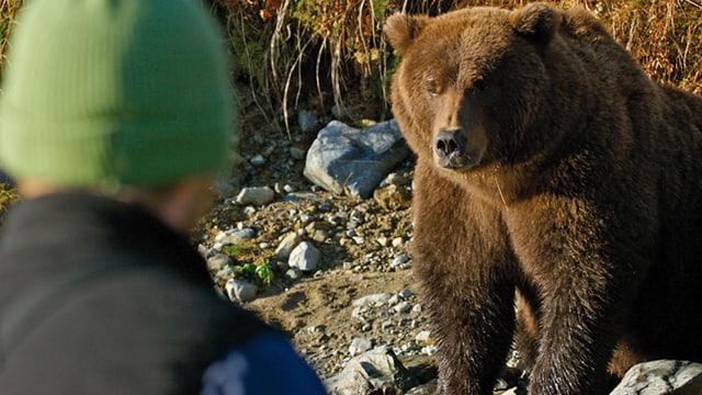 Video «Leben unter Grizzlies» abspielen