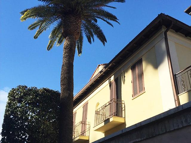 Hausfassade mit Palme davor.
