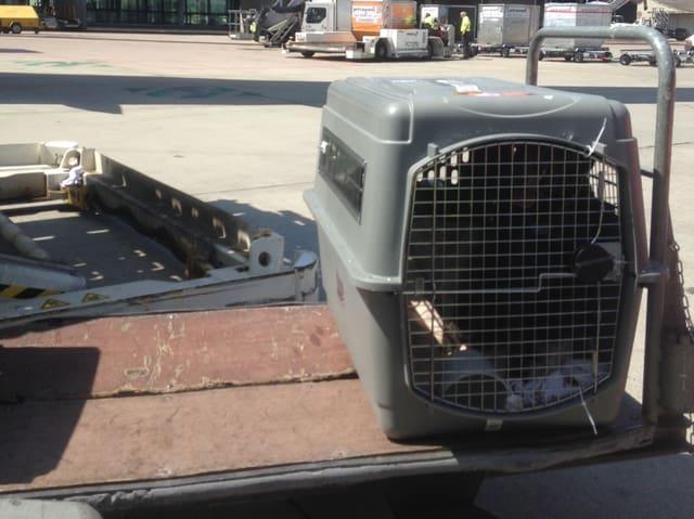 Hundebox auf Wagen draussen auf dem Rollfeld