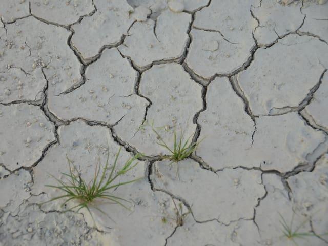 Ein trockener Boden weist tiefe Furchen auf. Es hat nur zwei grüne Grashalme.