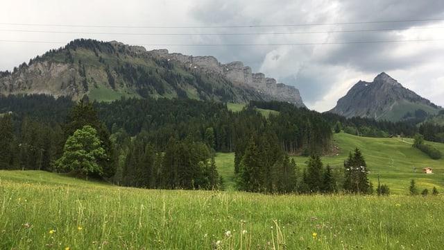 Blick auf Feld und Wald, ein Berg im Eriz
