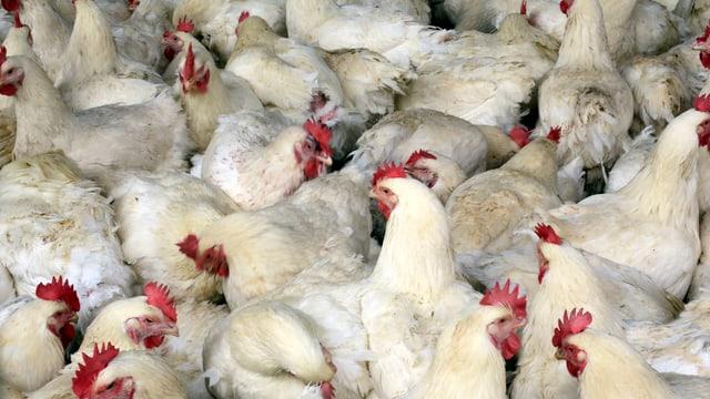 Hühner.