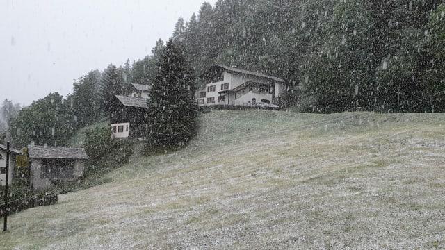 Leicht verschneite in Wiese in Vals.