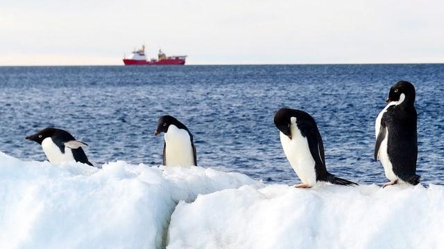 Pinguine auf einer Eisscholle.