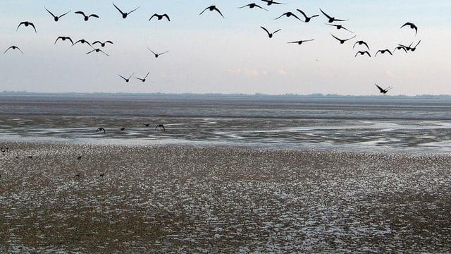 Vögel fliegen über das Wattenmeer