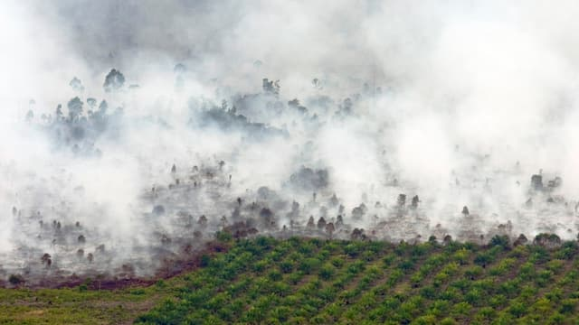 Brennender Wald, daneben Palmöl-Plantage, fotografiert aus der Luft.