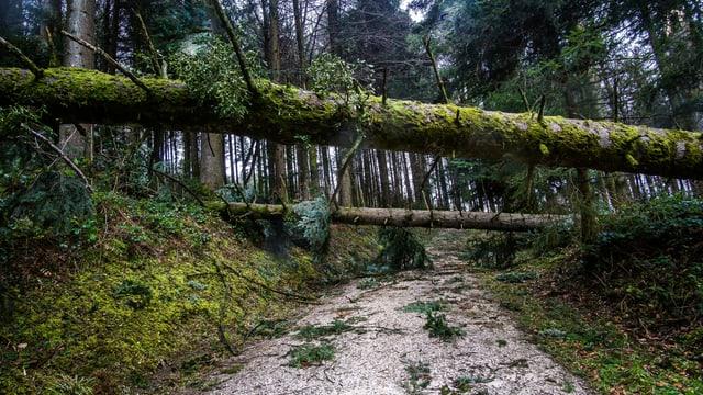 Mehrere Bäume liegen quer über einen Weg in der Nähe von Egolzwil.