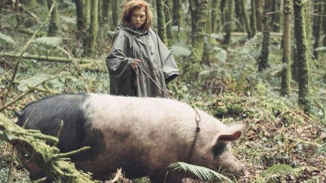 schwein im Wald