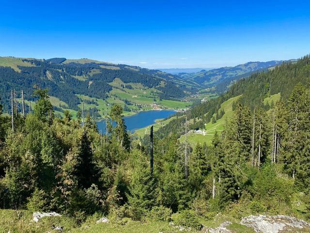 Nadelwälder wie in Kanada mit blauem See bei sonnigem Wetter