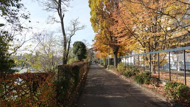Schmaler Weg am Rheinufer.