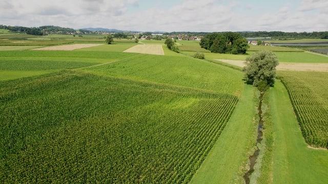 Grüne Felder durch die ein Fluss fliesst