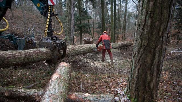 Arbeiter im Wald.