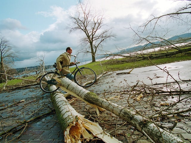Ein Mann drägt sein Velo über entwurzelte Bäume am Zürichseeufer.