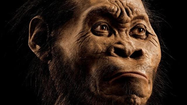 Modell des Kopfes eines Homo naledi