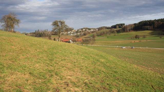 Saftige Wiesen am 25. Dezember 2012 im Zürcher Oberland