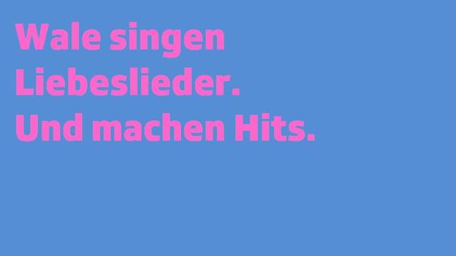Schrifttafel: Wale singen Liebeslieder. Und machen Hits.