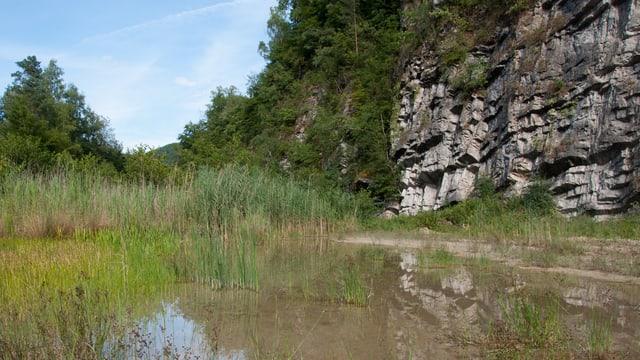 Felswand mit Spuren des Kalkabbaus, davor Teich