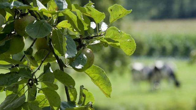 Nua stat l'agricultura Svizra e grischuna?