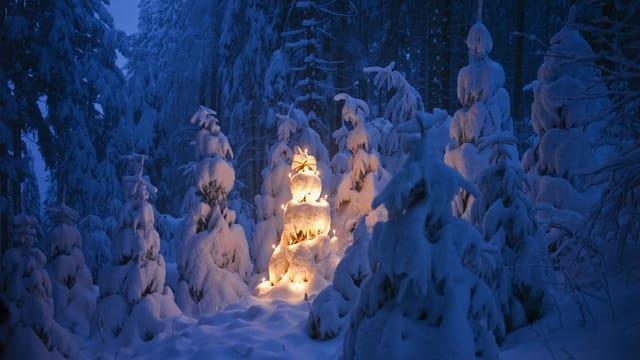 Ein verschneiter und beleuchteter Tannenbaum im Wald.