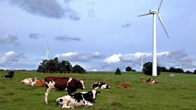 weidende Kühe auf einer Wiese mit Windräder