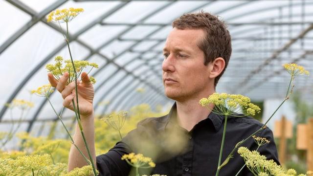 Ein Mann untersucht sehr genau eine Fenchelpflanze.