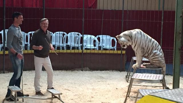 Roman wagt sich in die Höhle des...Tigers.