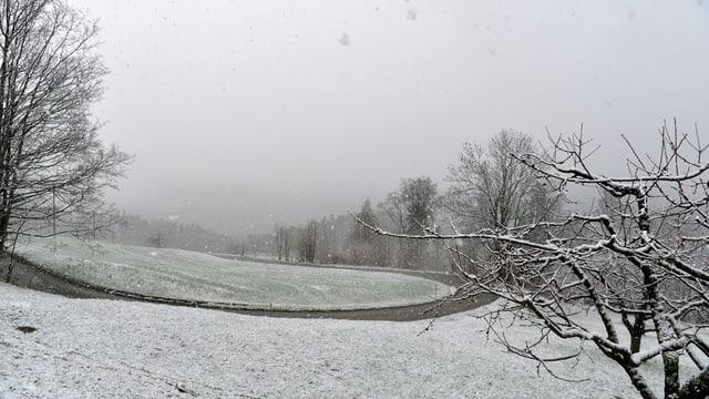 Verschneite Wiesen bei Bretzwil (BL).
