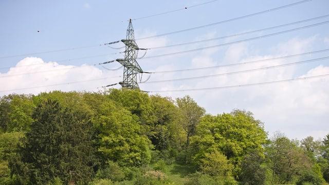Strommast in einem Waldstück