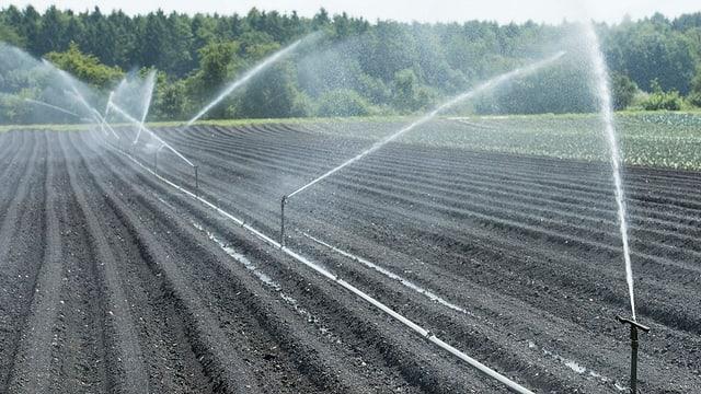 Bewässerungsanlage spritzt Wasser auf einen Acker