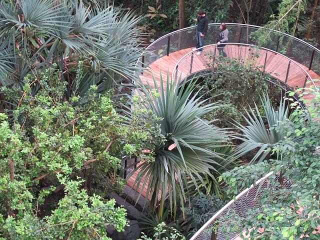 Blick vom neuen Baumkronenweg der Zürcher Masoala-Halle auf den Regenwald.