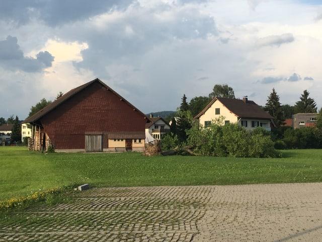 Baum liegt vor Bauernhof.