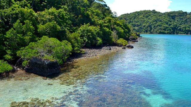 Bewaldetes Ufer neben Riff im Tun Sakaran Meerespark