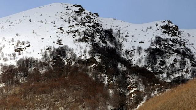 Waldgrenze in einem alpinen Gebiet