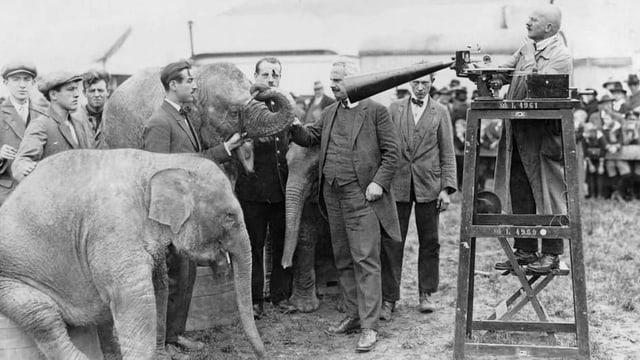 Leute nehmen die Geräusche eines Elefanten auf.