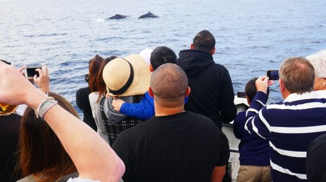 Touristen auf Walbeobachtungstour