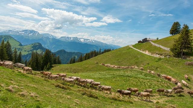 Alp Rona, Furna.
