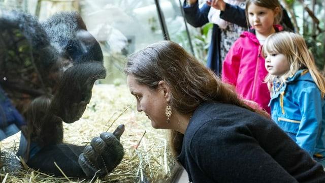 Gorilla und eine Frau stehen sich gegenüber