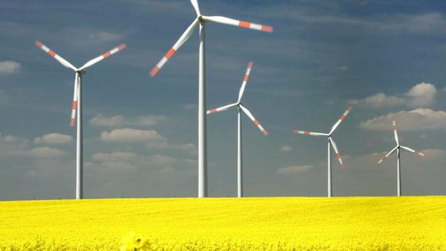 Windräder stehen in einem Rapsfeld bei Halle, Sachsen-Anhalt